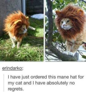 kittylion